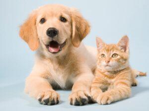 Diabetul la animale. Cum îl depistezi și previi, dacă ai o pisică sau cățel de companie?